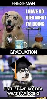 Senior Year Meme - 33 best freshman year vs senior year images on pinterest ha ha