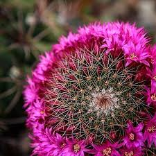 Succulent And Cacti Pictures Gallery Garden Design 11 Best Succulent Flowers Images On Pinterest Hunting Cacti And