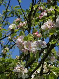 flowering plant howlingpixel