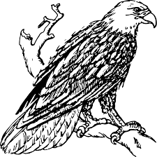 file bald eagle psf svg wikimedia commons