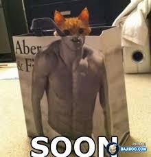 Soon Cat Meme - 30 funniest soon memes bajiroo com