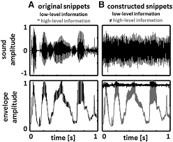 selective perceptual phase entrainment to speech rhythm in the