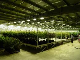 warehouse grow room design home design