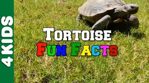 tortoise fun facts 4 kids youtube