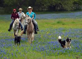 Texas Hill Country Bed And Breakfast Blisswood Bed And Breakfast Ranch Cat Spring Texas Prairies