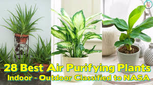 Best Plants For Bedroom 28 Best Air Purifying Plants For Indoor Outdoor Classified