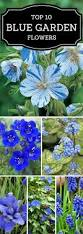 top 10 flowers that will make your garden a blue paradise blue