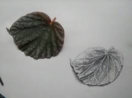 how to draw a leaf pencil drawing youtube