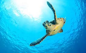 sea turtles are making a comeback and it u0027s the good news we needed