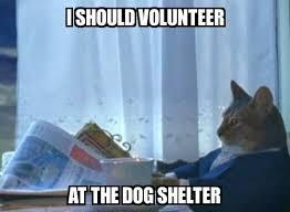Volunteer Meme - i should cat i should volunteer at the dog shelter meme explorer