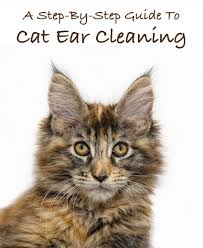 how to clean cats ears a step by step guide