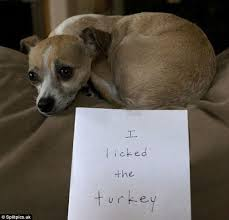 owners post photos of dogs after they ruin thanksgiving daily