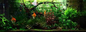 Tank Aquascape Bubbles Aquarium Aquascapes Tank Setups Projects