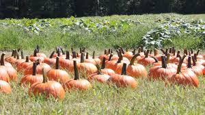 Great Pumpkin Blaze Membership by Agenda Weekender 68 Things To Do This Weekend Including Great