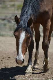 mustang org rescue protect mustangs