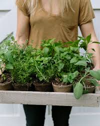 Diy Vertical Herb Garden Diy Vertical Garden With Burpee Home Gardens