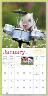 pocket pigs wall calendar 2016 the famous teacup pigs of