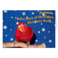 parrots christmas greeting cards zazzle