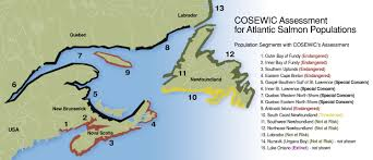 Newfoundland Canada Map by Atlantic Salmon Federation Species At Risk Process South Coast