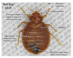 How To Get Rid Of Bed Bugs Yourself Fast Do It Yourself Bed Bug Heat Treatment Equipment Diy Bed Bug Heat
