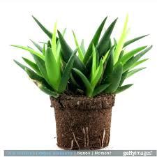 plante verte dans une chambre quelle plante dans une chambre feng shui pour la decoration open