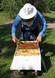Backyard Beehive How To Start An Urban Beehive Hobby Farms
