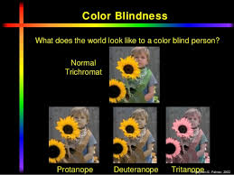 colour vision ppt by dr mazhar