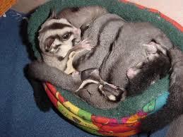 Hamster Bed Glidergossip