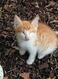 kitten wanders into a backyard but who walks in behind him whoa
