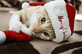 cat christmas cat christmas winter adorable santa pet santa claus claus