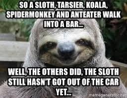 Anteater Meme Generator - so a sloth tarsier koala spidermonkey and anteater walk into a