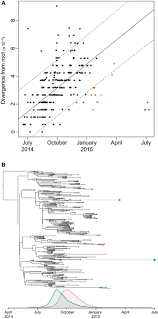 Home Evolutionary Healthcare Reduced Evolutionary Rate In Reemerged Ebola Virus Transmission