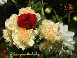 beautiful flower for mothers day ideas u0026 cute simple bouquets