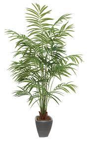 mini palm trees mini succulent plants bonsai buy mini succulent