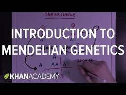 an introduction to mendelian genetics video khan academy