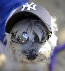 dog halloween costumes images dog halloween costume parade packs in pups in new york city