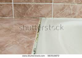 Mold Growing In Bathroom Black Mold Growing On Shower Grouted Stock Photo 537529063