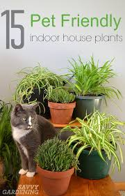 common house plants not poisonous to cats unsafe house plants for