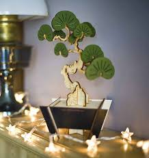 flat packed yew bonsai tree kit by pack tickle