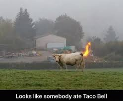 Funny Cow Memes - memebase cow all your memes in our base funny memes cheezburger