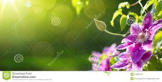 art summer or spring beautiful garden background stock photo