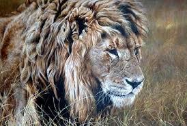 lions for sale original lion paintings wildlife artist alan m hunt