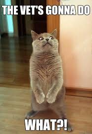 Vet Memes - the vet s gonna do cat meme cat planet cat planet