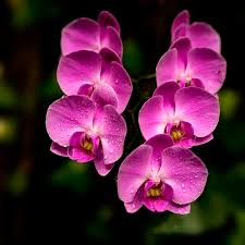 purple orchids solar worlds photography purple orchids