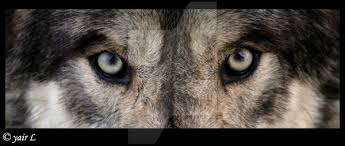 blue wolf eyes by 8twilightangel8 on deviantart