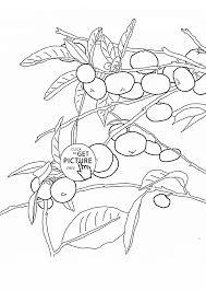 mandarin orange tree fruit coloring page for kids fruits coloring