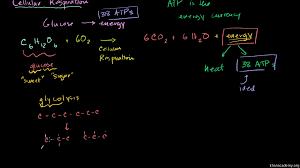 cellular respiration introduction biology video khan academy