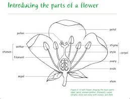 process my flower parts webquest
