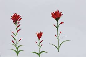 indian paintbrush flower paint indian paintbrush flower patch farmhouse