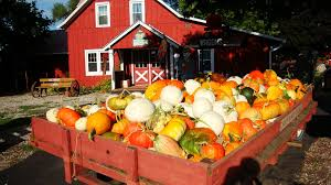 best pumpkin patches near chicago 2017